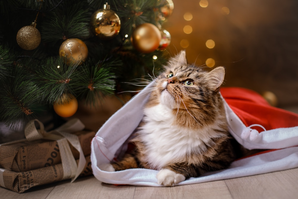 Trader Joe's Will Be Selling Cat Advent Calendars For Your Fur Babies This Christmas