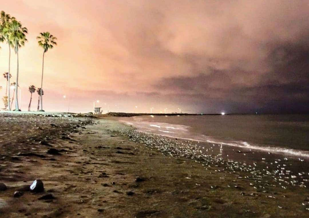 It's Grunion Run Season: A Sight You Can Only Witness On The California Coast!
