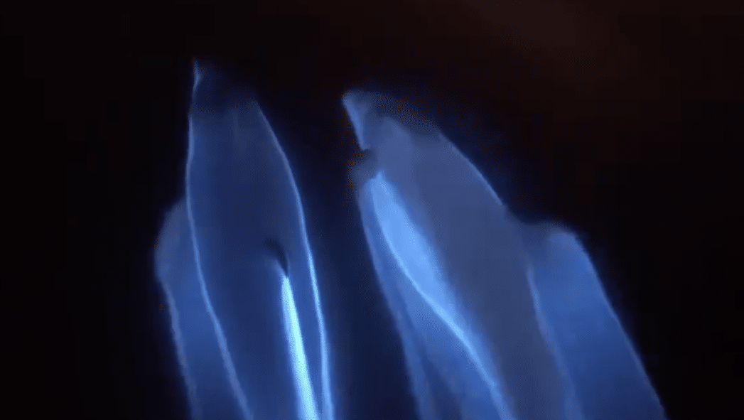 Bottlenose Dolphins Spotted Swimming in Bioluminescence Off Newport Beach Coast
