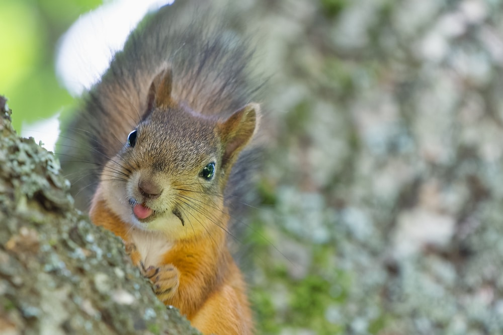 Squirrels Took Over A Santa Monica Park Amid Stay-At-Home Orders