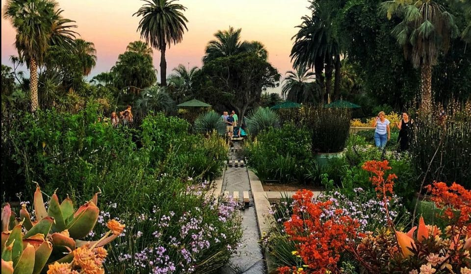 The Huntington Botanical Gardens Will Reopen With Advanced Bookings