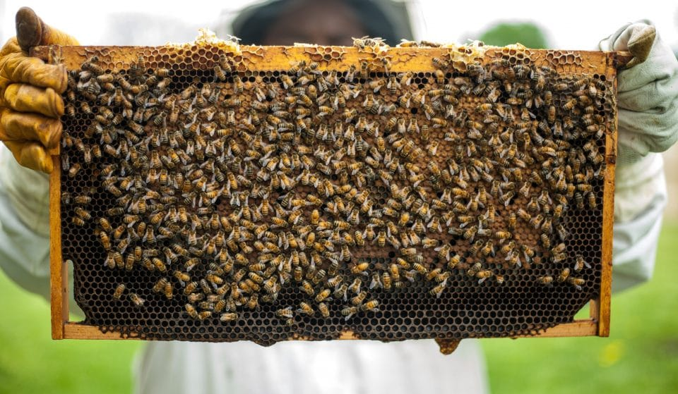 U.S. Honeybees Appear To Be Making A Comeback, According To A Survey